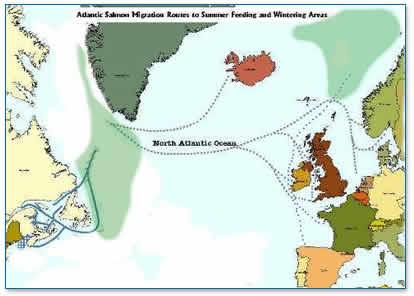 Salmon Migration RouteSalmon Life Cycle Map
